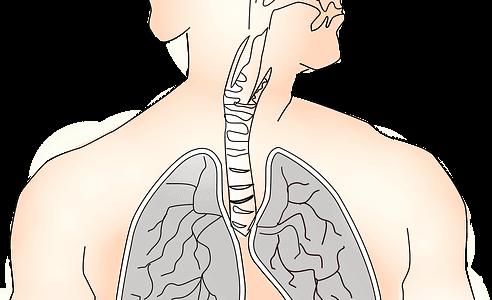 broncoscopia